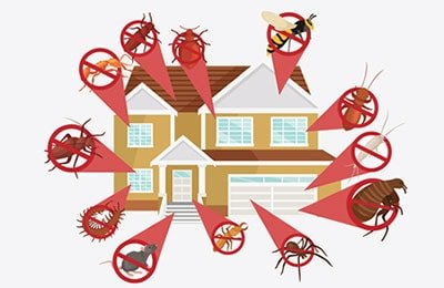 general-pest-control-spray-perth
