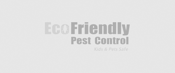 Best Pest Control Kensington