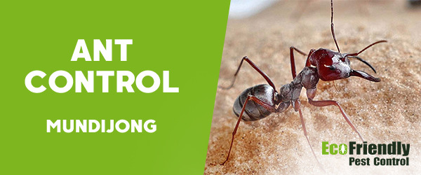 Ant Control  Mundijong