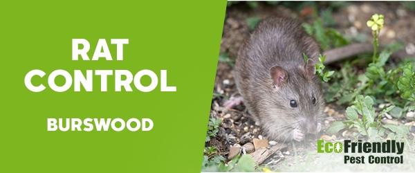 Rat Pest Control Burswood