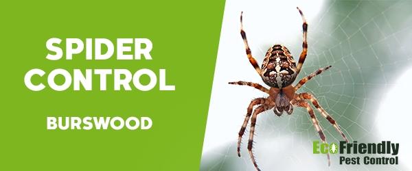 Spider Control Burswood