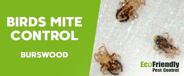 Bird Mite Control Burswood