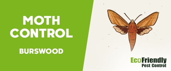 Moth Control Burswood