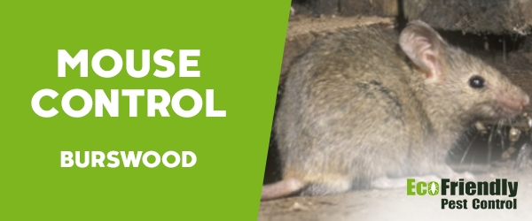 Mouse Control Burswood