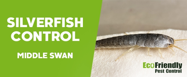Silverfish Control  Middle Swan