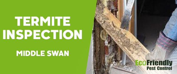 Termite Inspection  Middle Swan