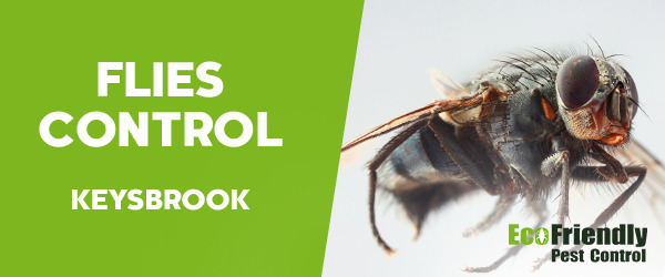 Pest Control Keysbrook