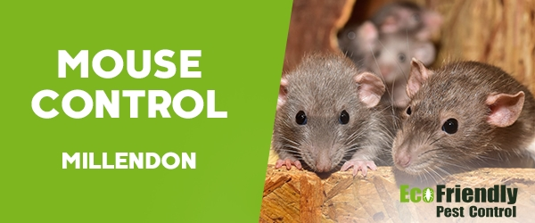 Pest Control Millendon