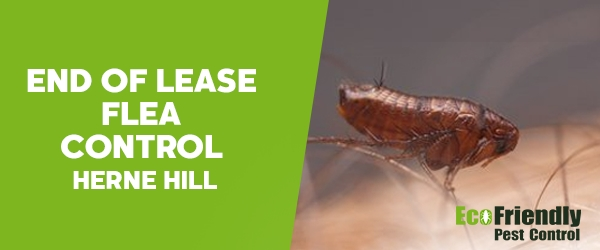 Pest Control Herne Hill