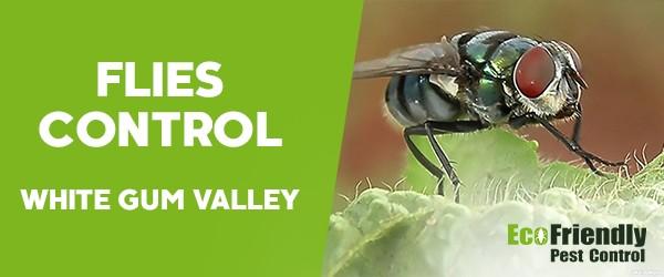 Pest Control White Gum Valley