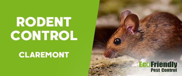 Rodent Treatment  Claremont