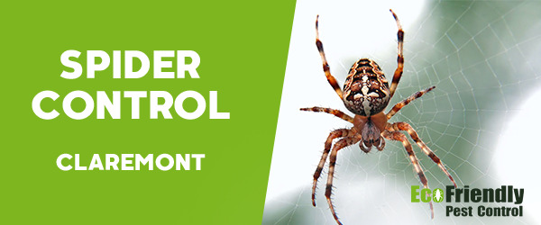 Spider Control  Claremont