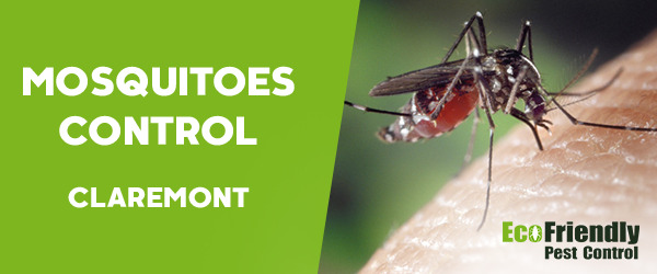 Mosquitoes Control  Claremont