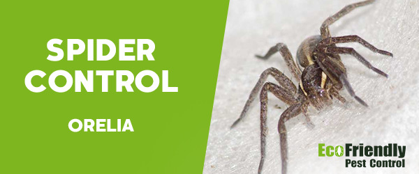 Pest Control Orelia