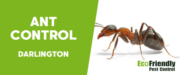 Ant Control Darlington