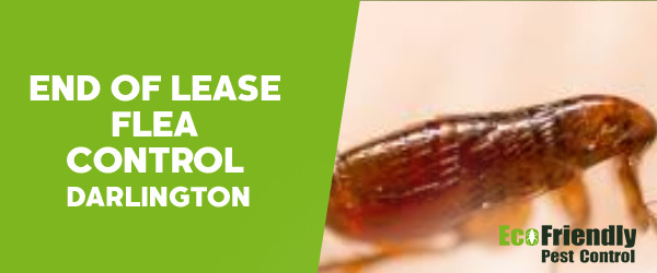 End of Lease Flea Control  Darlington