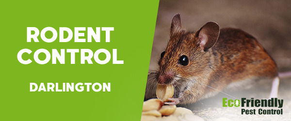 Rodent Treatment  Darlington