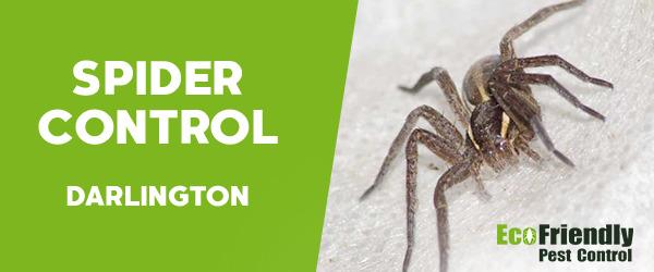 Spider Control  Darlington