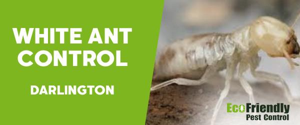 White Ant Control  Darlington