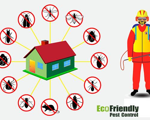 Pest Control Darlington
