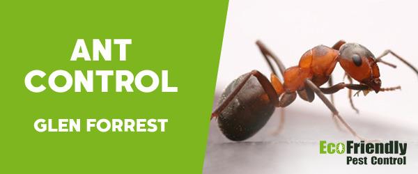 Ant Control Glen Forrest