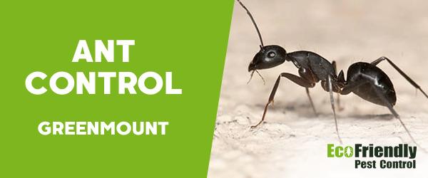 Ant Control GREENMOUNT