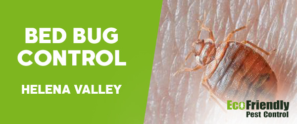 Bed Bug Control Helena Valley