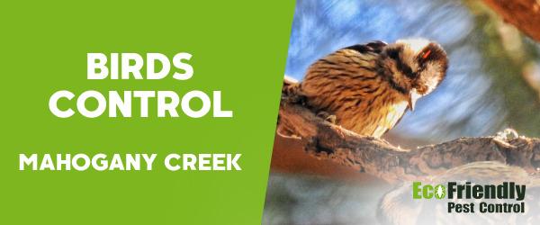 Birds Control MAHOGANY CREEK