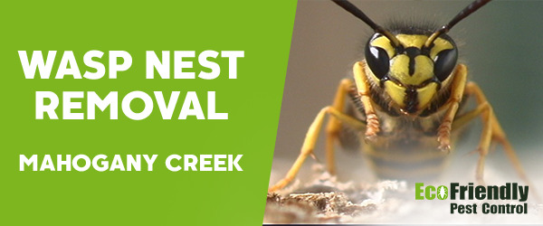 Wasp Nest Remvoal MAHOGANY CREEK