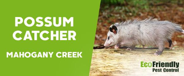 Possum Catcher MAHOGANY CREEK