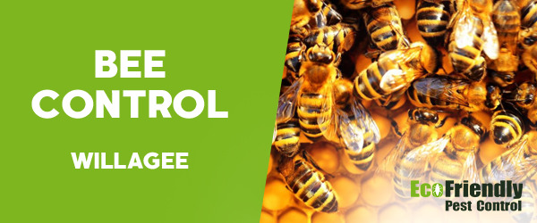 Bee Control Willagee