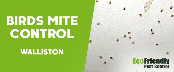 Bird Mite Control Walliston