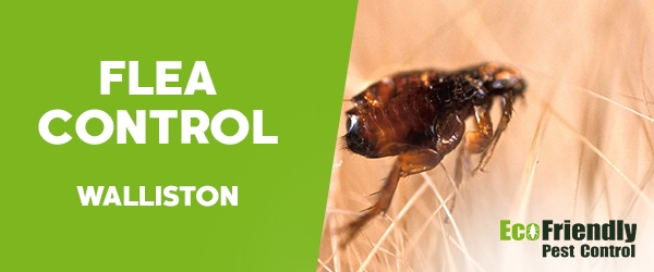 Fleas Control Walliston