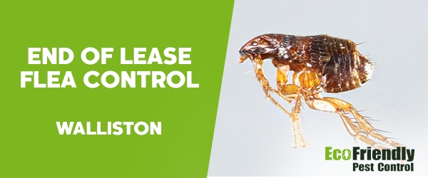 End of Lease Flea Control Walliston