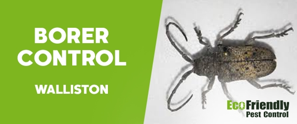 Borer Control Walliston