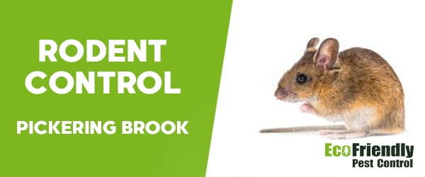 Rodent Treatment Pickering Brook