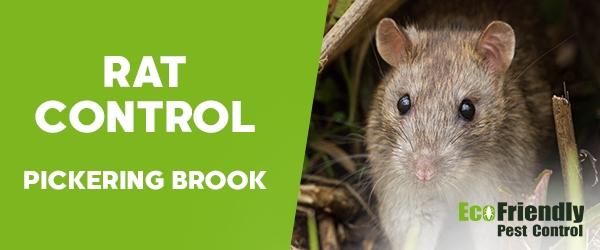 Rat Pest Control Pickering Brook