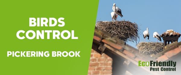 Birds Control Pickering Brook