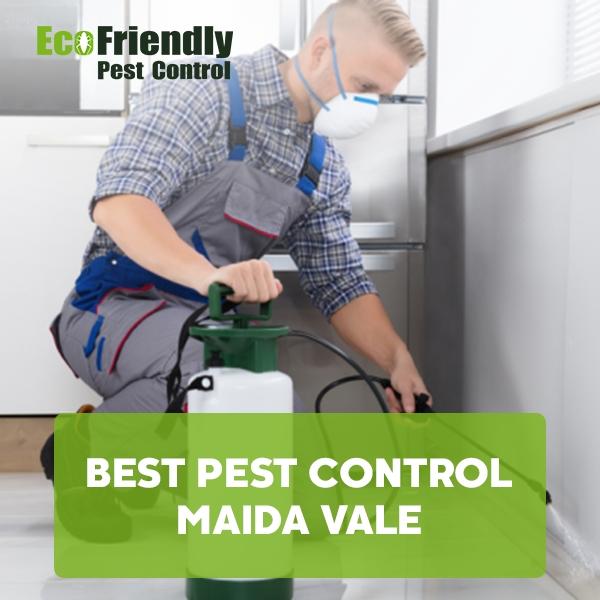 Best Pest Control Maida Vale