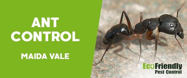 Ant Control Maida Vale