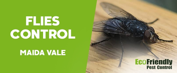 Flies Control Maida Vale