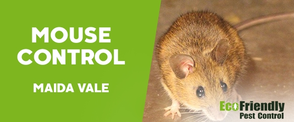 Mouse Control Maida Vale