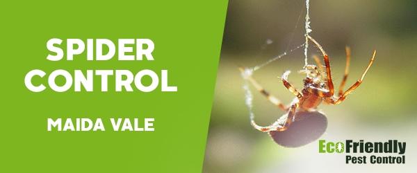 Spider Control Maida Vale