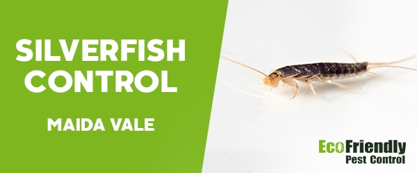 Silverfish Control Maida Vale