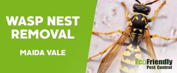 Wasp Nest Remvoal Maida Vale