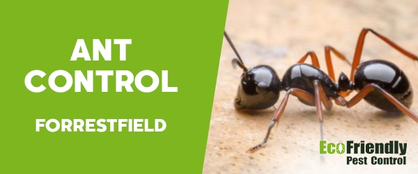 Ant Control Forrestfield
