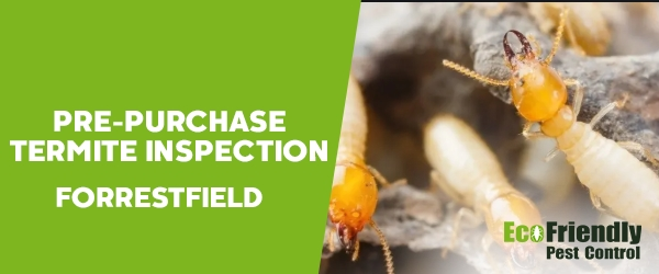 Pre-purchase Termite Inspection Forrestfield