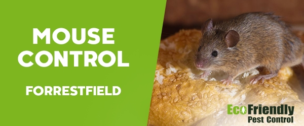 Mouse Control Forrestfield