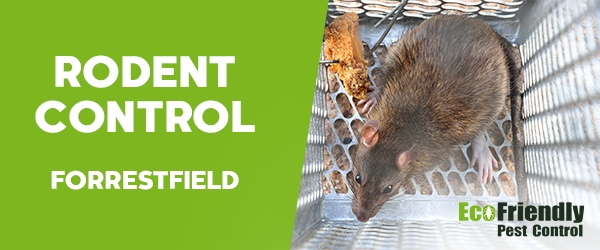 Rodent Treatment Forrestfield