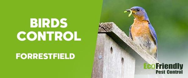 Birds Control Forrestfield